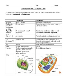 Prokaryotic And Eukaryotic Cells Worksheet | Teachers Pay ...