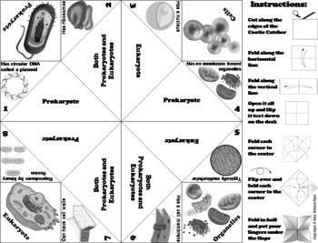 Prokaryotic and Eukaryotic Cells Activity/ Foldable