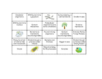 Prokaryotic and Eukaryotic Cells - Cut & Paste Venn Diagram