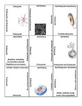 Prokaryotic and Eukaryotic Cells - Puzzle Activity (4B)