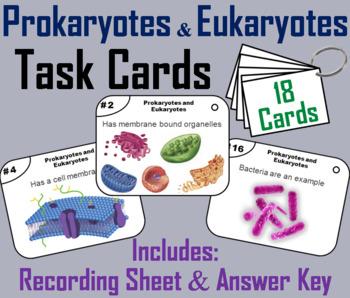 Prokaryotic and Eukaryotic Cells Task Cards