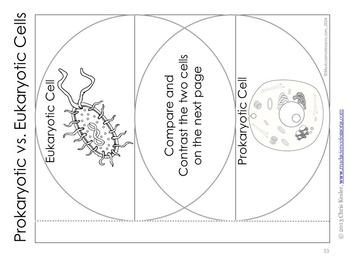 Prokaryotic and Eukaryotic Cells Interactive Notebook Pages