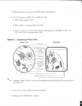 Prokaryotic and Eukaryotic Review