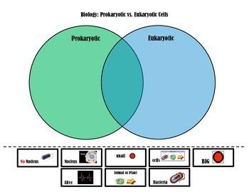 Prokaryotic vs Eukaryotic Cells Venn Diagram
