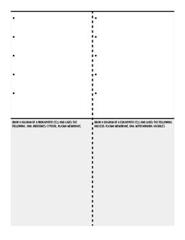 Prokaryotic vs. Eukaryotic Fold and Sort Activity