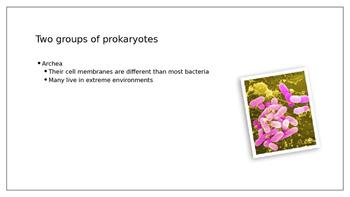 Prokayrotes and Viruses PowerPoint