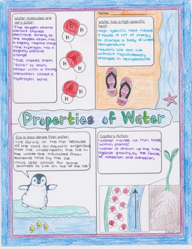 Properties of Water Biology Doodle Diagram