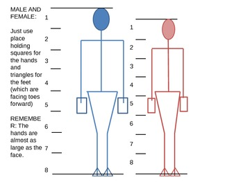 Proportion of the male figure vs the female figure