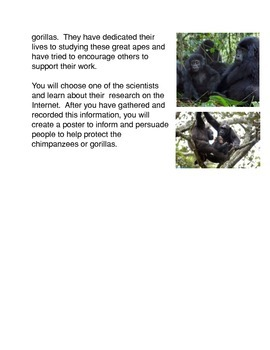 Protect the Chimpanzees and the Gorillas
