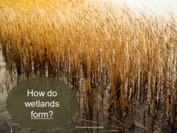 Protecting Wetlands: Webquest with Worksheet
