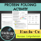 Protein Folding Activity with Mutations