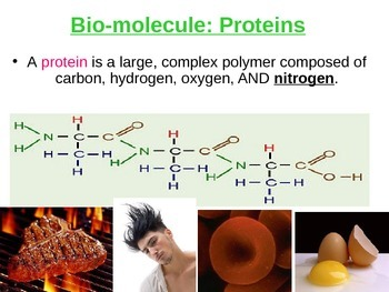 Protein Lecture PPT