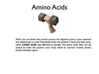 Protein PowerPoint