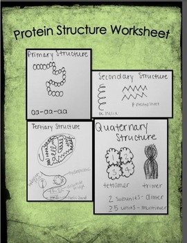 Protein Structure Walk Through Worksheet