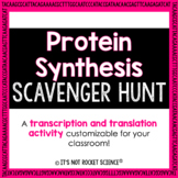 Protein Synthesis Scavenger Hunt Activity