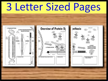 Protein Synthesis - Big Foldable for Interactive Notebooks or Binders