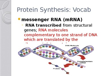 Protein Synthesis: Biology 12