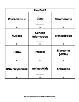 Protein Synthesis Connection Cards  (Vocabulary Strategy)