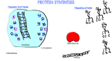Protein Synthesis Made Easy - Notebook File