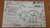 Protein Synthesis Poster