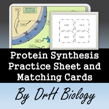 Protein Synthesis Practice Sheet and Matching Cards