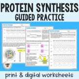 Protein Synthesis Guided Practice - Transcription and Translation