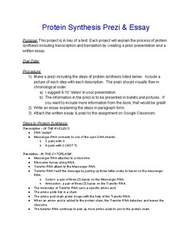 Good Thesis Statements For Essays  What Is The Thesis In An Essay also Argument Essay Topics For High School Protein Synthesis Prezi  Essay Alternative Assessment How To Write An Essay For High School