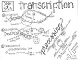 Protein Synthesis Sketch Notes Bundle