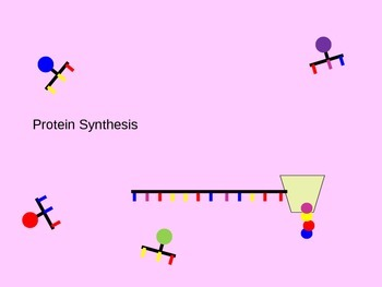 Protein Synthesis (Transcription & Translation) Animated PowerPoint