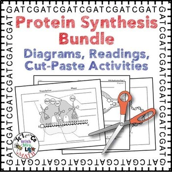 Protein Synthesis Transcription Translation and Replication Activity Bundle