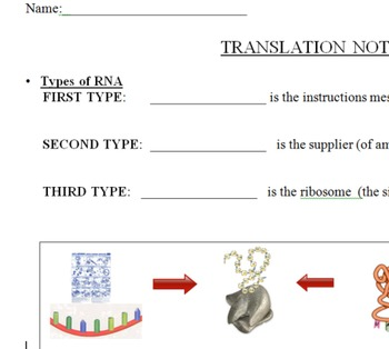 Protein Synthesis Translation Notes Page