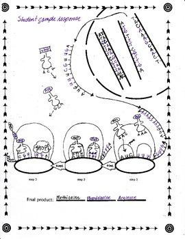Protein Synthesis Tutorial