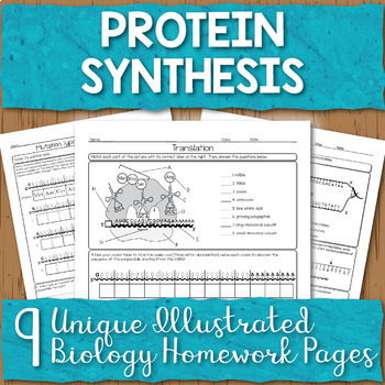 Protein Synthesis Unit Homework Pages