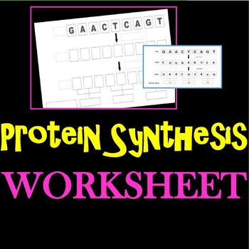 Protein Synthesis Worksheet Teachers Pay Teachers