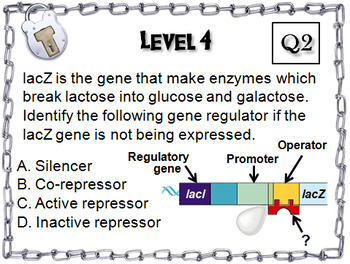 Protein Synthesis and Gene Regulation Activity: AP Biology Escape Room Science