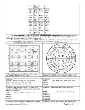 Protein Synthesis and Genetic Code Worksheet