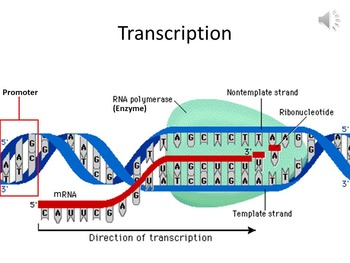 Protein Synthesis and the Genetic Code