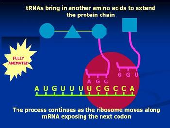 Protein synthesis  interactive PowerPoint  animation : Teachers edition