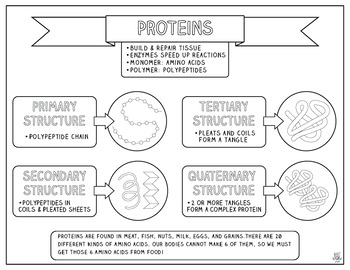 Proteins Doodle Notes