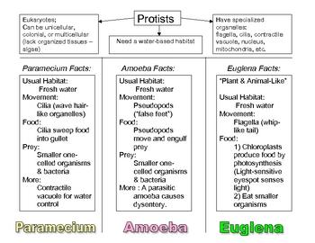 Protist Brochure (A Protozoa Paper-Fold Activity)  Sf-1