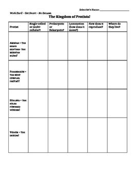 Protist Characteristics Graphic Organizer
