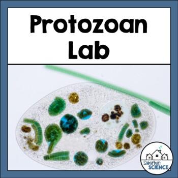 Protist Diversity Lab