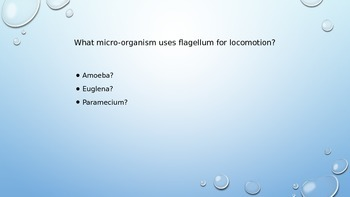 Protist Microorganism PPT Review
