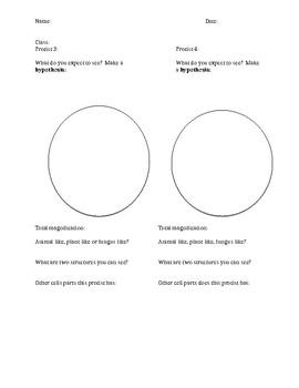 Protist Microscope Drawings