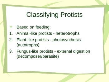 Protist PowerPoint