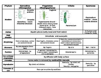 Protista summary