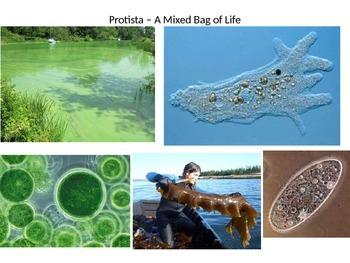 Protists - A Mixed Bag of Life