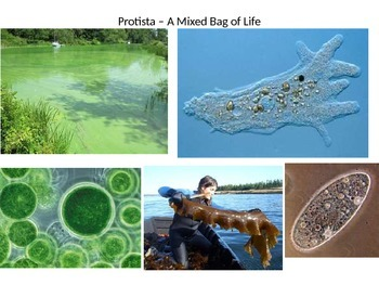 Protists - A Mixed Bag of Life