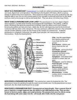 Protists Anatomies and Basics
