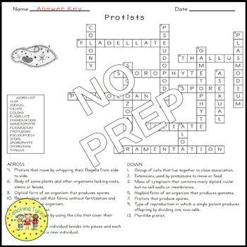 Protists Crossword Puzzle